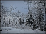 Winter scene by GIGIBL, photography->landscape gallery