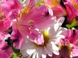Happy Birthday, Bob! by marilynjane, Photography->Flowers gallery