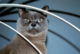 Feline Friday  #1 by braces, photography->pets gallery
