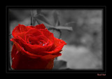 Red Hot (Rework) by fra99y, Rework gallery