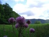 Purples 'n greens by johnnyblaze187, photography->macro gallery