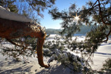 Pine View by Silvanus, photography->landscape gallery