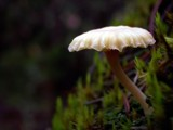 Bad Posture by mayne, Photography->Mushrooms gallery