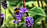 Bee Happy ! by LynEve, photography->manipulation gallery