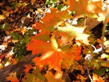 Fall's Repose by mrpun46, Photography->Nature gallery