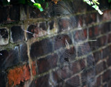 Spider's Home #2 by braces, Photography->Insects/Spiders gallery