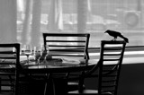Wine and Dine by LakeMichigan, contests->b/w challenge gallery