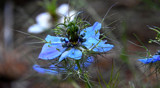 Alien Foofy by braces, photography->flowers gallery