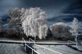 Snow Trees by biffobear, photography->manipulation gallery