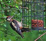 Ho-ho-ho ho ho by biffobear, photography->birds gallery