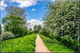 Hawthorn Path by corngrowth, photography->landscape gallery