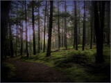 The Beloved Forest by Pjsee16, photography->landscape gallery