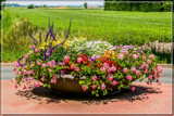 Decorated Roundabout by corngrowth, photography->flowers gallery