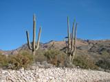 Arizona 3 by RobNevin, Photography->Landscape gallery
