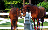 Horse Love by SatCom, Photography->Animals gallery