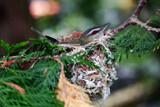 Momma's Nest by casperkid004, photography->birds gallery
