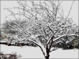 Another Day - Another Snowstorm by trixxie17, photography->landscape gallery