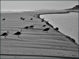 Downtime On the Tide Plain by Pjsee16, photography->shorelines gallery