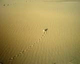 Wandering Pebble by Kekmet, photography->textures gallery