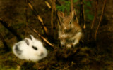 Happy Easter Bunnies by boremachine, Photography->Animals gallery