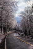 The Road to the Top.....White Top, VA that is! by nanadoo, photography->landscape gallery