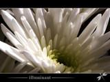 illuminant by kodo34, Photography->Flowers gallery