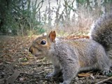Hmmm..... Encounter of the squirrel kind by projoe, Photography->Animals gallery