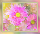Floating Daisies by LynEve, photography->flowers gallery