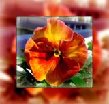 earliest FF by Marzena, photography->flowers gallery