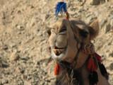 Hi, hi... by AFTO, Photography->Animals gallery