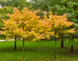 No Dreary Day in Autumn by Terrydel, contests->Fall Festivities gallery
