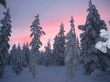 lapland in winter by JanT, Photography->Landscape gallery