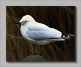 Just Thinking   ! by LynEve, Photography->Birds gallery
