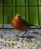 Hmm by biffobear, photography->birds gallery