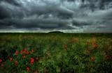In Flanders Field by biffobear, photography->landscape gallery