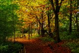 Autumnal Walk by biffobear, photography->landscape gallery