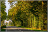Just A Country Road 3 by corngrowth, photography->landscape gallery