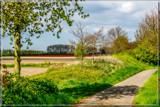 Zeeland Tulip Fields 1 by corngrowth, photography->landscape gallery