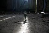 Commando by pauldb, photography->still life gallery