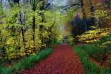 Woodland Walk.. by biffobear, photography->landscape gallery