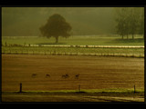 Roe deers in plowed fields by ppigeon, Photography->Landscape gallery