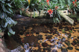 Amazonian Freshwater by Nikoneer, photography->animals gallery