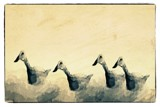 Ducks In A Row by bfrank, illustrations gallery