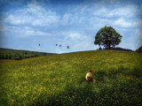 Girl in field by biffobear, photography->manipulation gallery