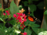 Orange You Glad by wheedance, Photography->Butterflies gallery