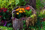 Garden Flower Display For Friday by tigger3, photography->flowers gallery