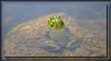 A Calendar Garden Resident by tigger3, photography->reptiles/amphibians gallery