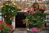 Cottage door by biffobear, photography->flowers gallery