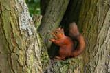Tufty by biffobear, photography->animals gallery