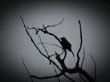 BIRD 4 by picardroe, photography->birds gallery